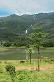 Mountain landscape and lake. Forested mountain landscape in Kerala with stream and waterfall feeding lake in the valley beside which cattle graze royalty free stock image