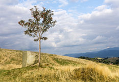 Mountain landscape with lonely rowan tree. (Sorbus aucuparia, mountain ash). Cloudy sky. Silesian Beskids, Poland Royalty Free Stock Photo