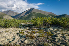 Mountain landscape in Magadan area. Hills, covered with evergreen shrubs and moss with mountain range in the background Stock Photo
