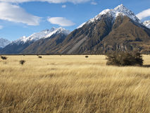 Mountain landscape, New Zealand Stock Image