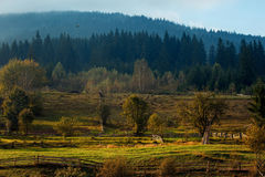 Mountain landscape with paddock for horses illuminated by the su Royalty Free Stock Images