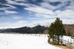 Mountain landscape panorama with spruce and pine trees and ground covered by snow in a ski area in the Alps during a sunny day stock images