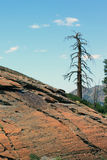 Mountain Landscape. A photograph of a dead tree by glacial rocks Stock Image