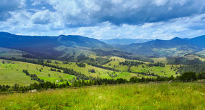 Mountain landscape. With pine forest and meadow Stock Images