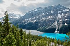 Pine forest and turquoise Peyto lake stock photography