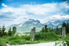 Mountain landscape pine root. Mountain landscape with old pine root Royalty Free Stock Photography