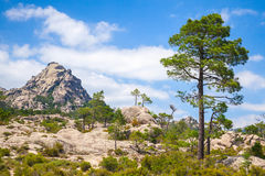 Mountain landscape with pine tree under sky Stock Images