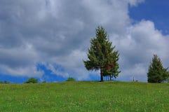 Mountain landscape with pine trees 2. Mountain landscape with pine trees and cloudy blue sky Royalty Free Stock Photo