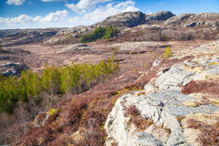 Mountain landscape with pine trees, Norway Royalty Free Stock Photos