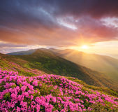Mountain landscape with pink flowers at sunset stock images