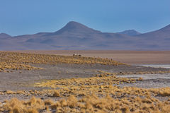 Mountain landscape of the plateau of Altiplano in Bolivia Stock Image