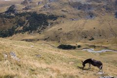 Donkey grazing up in the Carpathians mountains Royalty Free Stock Images