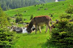 Mountain landscape with river and grazing donkey Royalty Free Stock Photography
