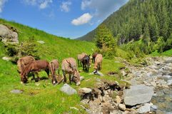 Mountain landscape with river and grazing donkeys Stock Photography