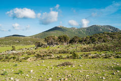 Mountain landscape in Sardinia Royalty Free Stock Images