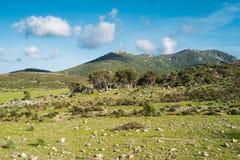 Mountain landscape in Sardinia. Mountain landscape along Road 125 between Baunei and Dorgali, Sardinia, Italy Royalty Free Stock Images
