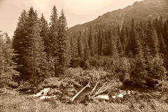 Mountain landscape in sepia Royalty Free Stock Images