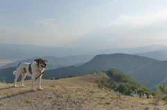 Mountain landscape and sheep-dog Royalty Free Stock Images