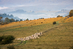 Mountain landscape with sheep Stock Photography