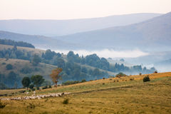 Mountain landscape with sheep Royalty Free Stock Image