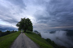 Mountain landscape shortly after spring rain. Slovenian Alps. Forest Road, venerable tree, fog, clouds and peaks. The village of J Royalty Free Stock Images