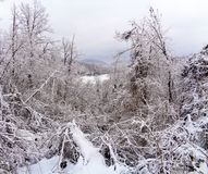 A mountain landscape with snow and trees in front. A view landscape mountain with snow with some frozen trees in front Stock Photos