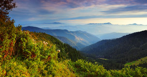 Mountain landscape in the summer Royalty Free Stock Photos