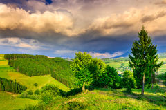Mountain landscape on summer evening with a cloudy sky. Mountain landscape with pine forest a warm summer evening with a cloudy sky after the storm Royalty Free Stock Photography