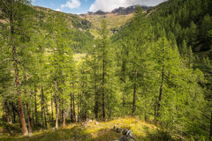 Mountain landscape. Summer view of the Rabbi Valley, Trentino Alto Adige, Italy Stock Images