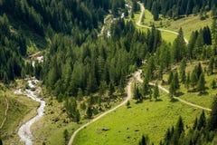 Mountain landscape. Summer view of the Rabbi Valley, Trentino Alto Adige, Italy Stock Image