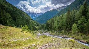 Mountain landscape. Summer view of the Rabbi Valley, Trentino Alto Adige, Italy Royalty Free Stock Images