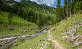 Mountain landscape. Summer view of the Rabbi Valley, Trentino Alto Adige, Italy Stock Photography