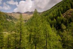 Mountain landscape. Summer view of the Rabbi Valley, Trentino Alto Adige, Italy Stock Photo