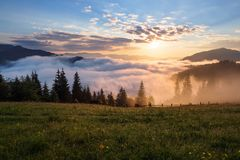 Mountain landscape. Sunrise in the clouds. Dense fog with nice soft light. On the lawn the grass and flowers in dew. Wooden fence and tall spruces Royalty Free Stock Images
