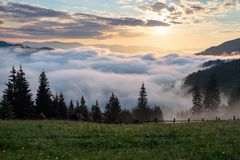 Mountain landscape. Sunrise in the clouds. Dense fog with nice soft light. On the lawn the grass and flowers in dew. Wooden fence and tall spruces Royalty Free Stock Photos