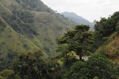 Mountain landscape in the surroundings of Nuwara Eliya Stock Images