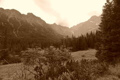 Mountain Landscape. In Tarzanski National Park in Southern Poland. Photo converted to sepia Stock Photo