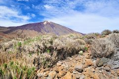 View of Teide Stock Image