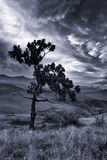 Mountain landscape with tree and dramatic clouds artistic conver Royalty Free Stock Photo