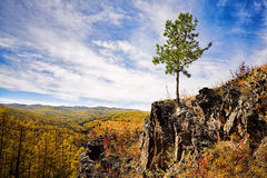 Mountain landscape with tree Royalty Free Stock Photo