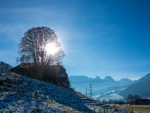 Mountain landscape, tree in the sun Stock Image