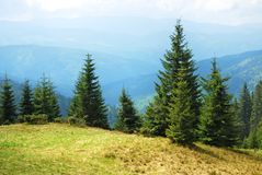 Mountain landscape with trees Stock Images