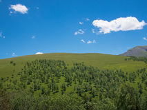 Mountain landscape with trees and grass Stock Images