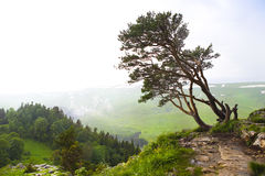 Mountain landscape. Valley view. Stock Images