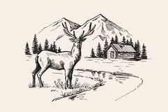 Mountain landscape vector. Hand drawn vector illustration of mountain landscape with deer Royalty Free Stock Image