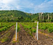 Mountain landscape with vineyard Royalty Free Stock Photo