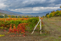 Mountain landscape with vineyards at fall season Stock Photography