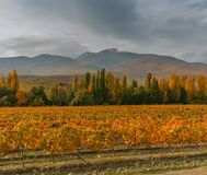Mountain landscape with vineyards and rainy skies at fall season Stock Images