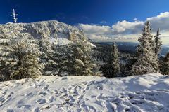 Mountain landscape in winter. Snowy pine and winter mountain landscape Stock Photography