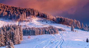 Bucegi mountains,Romania.Warm and colorful sunset over snow covered trees in an idyllic mountain landscape in winter Royalty Free Stock Image